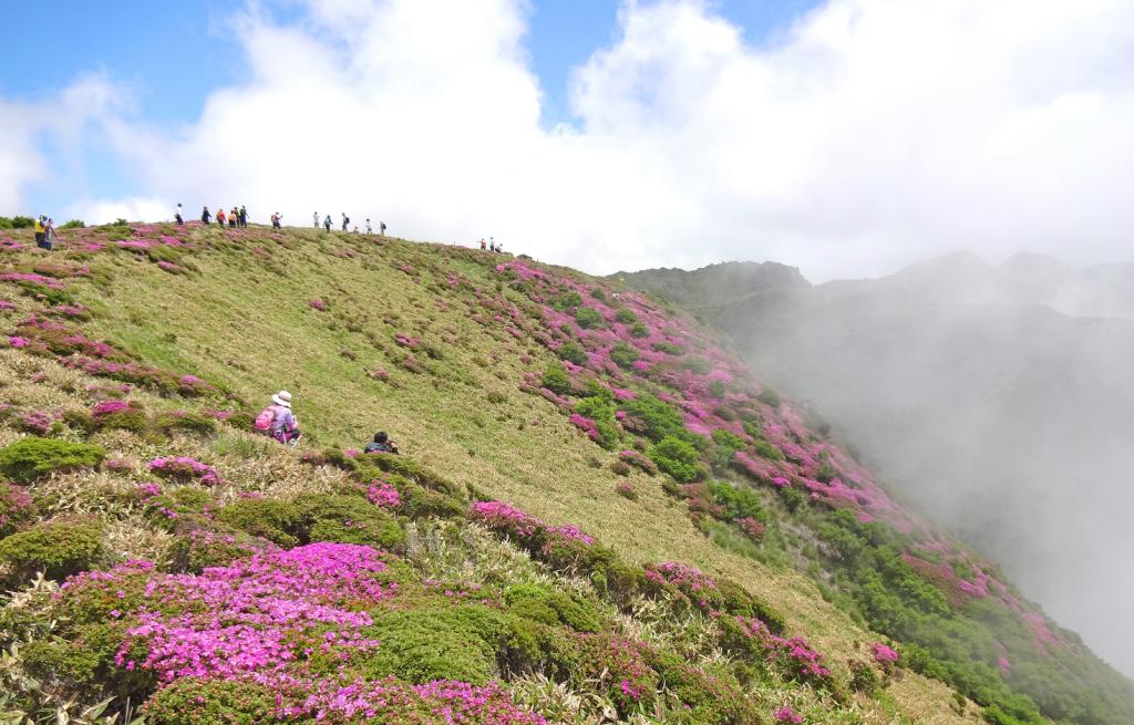 Flower garden at Kuju National Park‼
