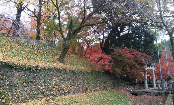 Autumn leaves in Akizuki Castle Site.