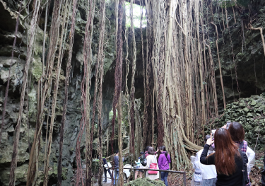 Forest in the cave~Valley of Gangala~